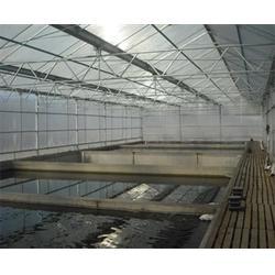 芳诚温室,温室大棚建设,简易温室大棚建设图片