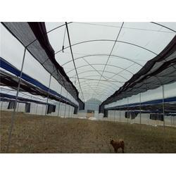 温室大棚建设,温室大棚建设标准,芳诚温室建设(多图)图片