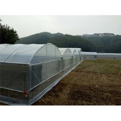 温室大棚,芳诚;工程承建,温室大棚骨架图片