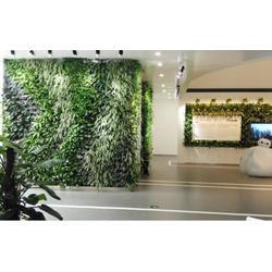 植物墙怎么做,当阳植物墙,绿生霖植物墙图片
