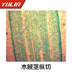 植物茎及茎的形态显微观察切片-雨林教育-显微观察切片图片