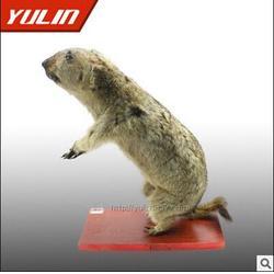 商丘动物标本_雨林教育值得信赖_动物标本图片