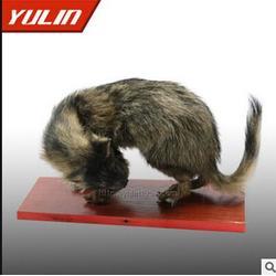 动物标本,三门峡动物标本,雨林教育值得信赖图片