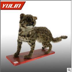 驻马店动物标本、动物标本厂家、雨林教育是您正确的选择图片