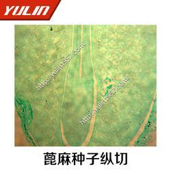 顯微觀察切片-雨林教育-植物類根莖葉顯微觀察切片