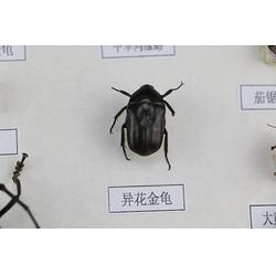 出售昆虫标本、雨林教育(在线咨询)、山东昆虫标本图片