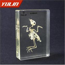 标本,雨林教育,脊椎动物五纲后肢骨比较标本图片