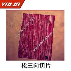 生物玻片,紫苏根横切生物玻片,雨林教育(优质商家)图片