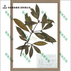 植物腊叶标本的制作、腊叶标本、腊叶标本厂家(查看)图片