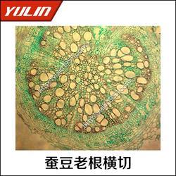 耐旱植物根茎叶切片显微观察切片-雨林教育-眉山显微观察切片图片