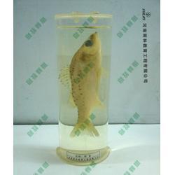 标本,雨林教育,鱼解剖浸制标本图片