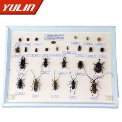 雨林教育(图)、直翅目科昆虫标本10种、标本图片