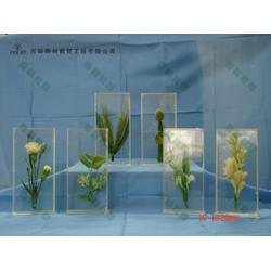 雨林教育 水果植物浸制标本-标本图片