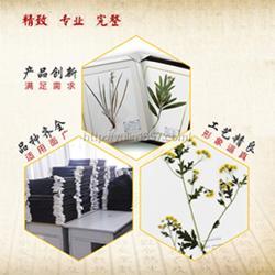 蜡叶标本-雨林教育-瑞香科了哥王蜡叶标本图片