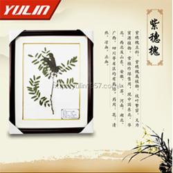 蠟葉標本-雨林教育-珠子蕨科莢果蕨蠟葉標本批發