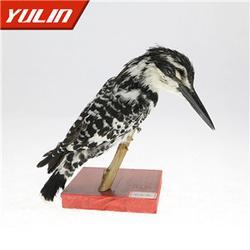 标本、鸟类标本制作、雨林教育(推荐商家)图片