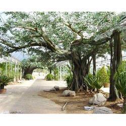 合肥假树、合肥鑫磊假树、定制假树图片