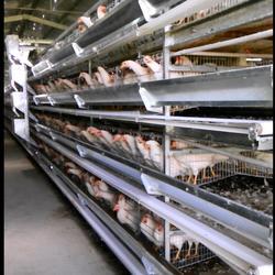 五莲鸣飞鸡笼加工部 定制鸡笼规格尺寸-河北鸡笼图片