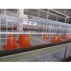 大立体肉鸡笼-五莲鸣飞鸡笼厂家-济南肉鸡笼图片