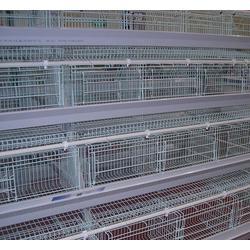阶梯式肉鸡笼-阶梯式肉鸡笼多少钱一组-鸣飞鸡笼图片