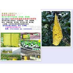 彦晨实业生产供应粘虫板 诱虫板 粘虫黄板图片