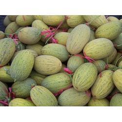 宁波水果配送-提供水果配送-北半球食品图片