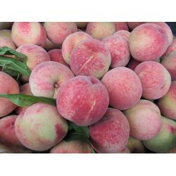 水果配送 水果配送 苏州北半球食品有限公司