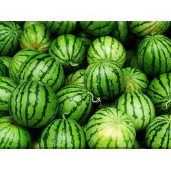 提供水果配送 舟山水果配送 北半球食品