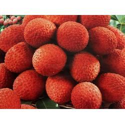 水果配送哪家好-水果配送-苏州北半球食品公司(查看)图片