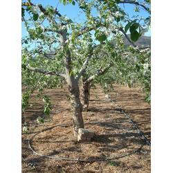 北海果树灌溉、果树灌溉设计、亿安鑫节水灌溉图片