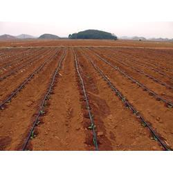 固定式微灌供应商、固定式微灌、广西亿安鑫图片