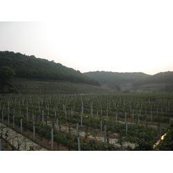 固定式微灌系统安装|柳州固定式微灌|亿安鑫图片