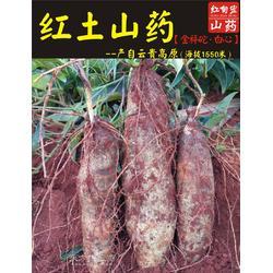 马自然山药种植销售合作社红土山药 新鲜上市图片