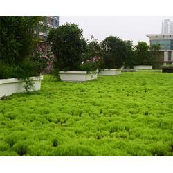 江苏屋顶绿化-安徽亚井塑业(优质商家)屋顶绿化系统图片