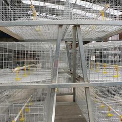 不锈钢肉鸡笼、广西不锈钢肉鸡笼、牧辰畜牧图片