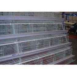 不锈钢蛋鸡笼订购-不锈钢蛋鸡笼-牧辰鸡笼(查看)图片