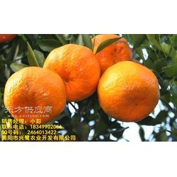 出售柑橘苗,柑橘苗,柑橘苗特点管理图片