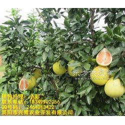 出售柚子苗嫁接,柚子苗除草,柚子苗施肥管理图片