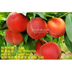 桃树苗出售,桃树苗管理,桃树苗图片