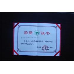 唐山市莲藕种植、莲藕种植、鲁中池藕图片