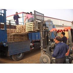 莲藕新品种-鲁中池藕(在线咨询) 河南莲藕新品种图片