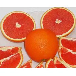 柑橘树苗-潜江柑橘树苗-苗木供应图片