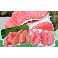 神农架柑橘树苗-果树苗木供应-柑橘树苗图片