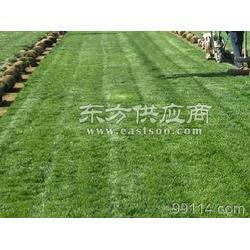 环保门球场人造草坪排名图片