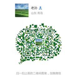 国家标准人造种植草坪图片