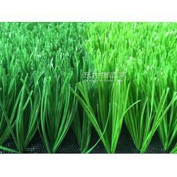 销售塑料门球场人造草坪图片
