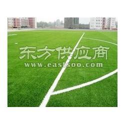 专用足球场人造草坪和天然草坪图片