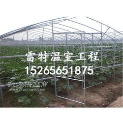 专业提供大棚蔬菜建设 温室建造 合理图片