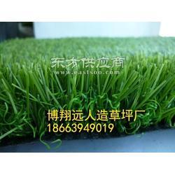 仿真草坪綠植圖片