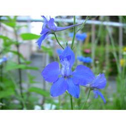 草花造型、草花、青州山一供应各种草花图片